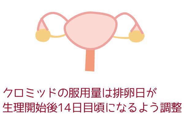 クロミッドの服用量は排卵日が 生理開始後14日目頃になるよう調整