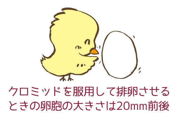 クロミッドを服用して排卵させるときの卵胞の大きさは20mm前後